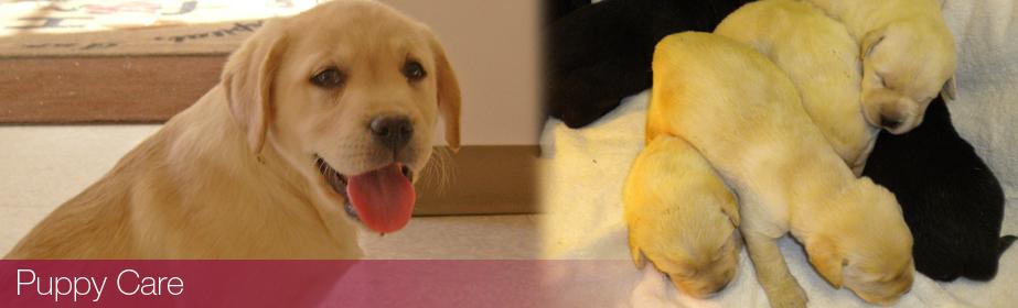 Puppy Care in Burnsville, MN | Smith Veterinary Hospital